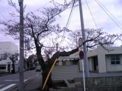 桜4.2837_400