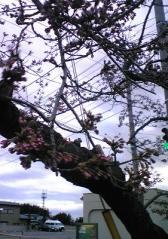 桜4.28-01_400