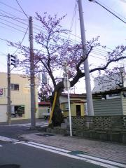 桜4.30-48_600