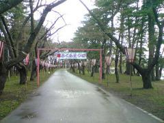 桜4.30-50_600