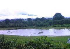 豪雨27_600