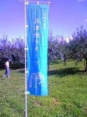 のぼり旗50_600