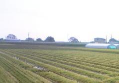 稲刈36_600