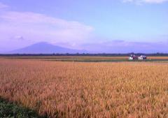 稲刈り01_600