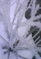 雪結晶25_600