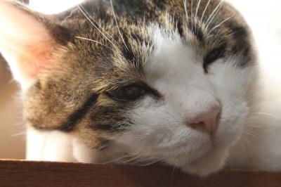 朝日を浴びる猫 2
