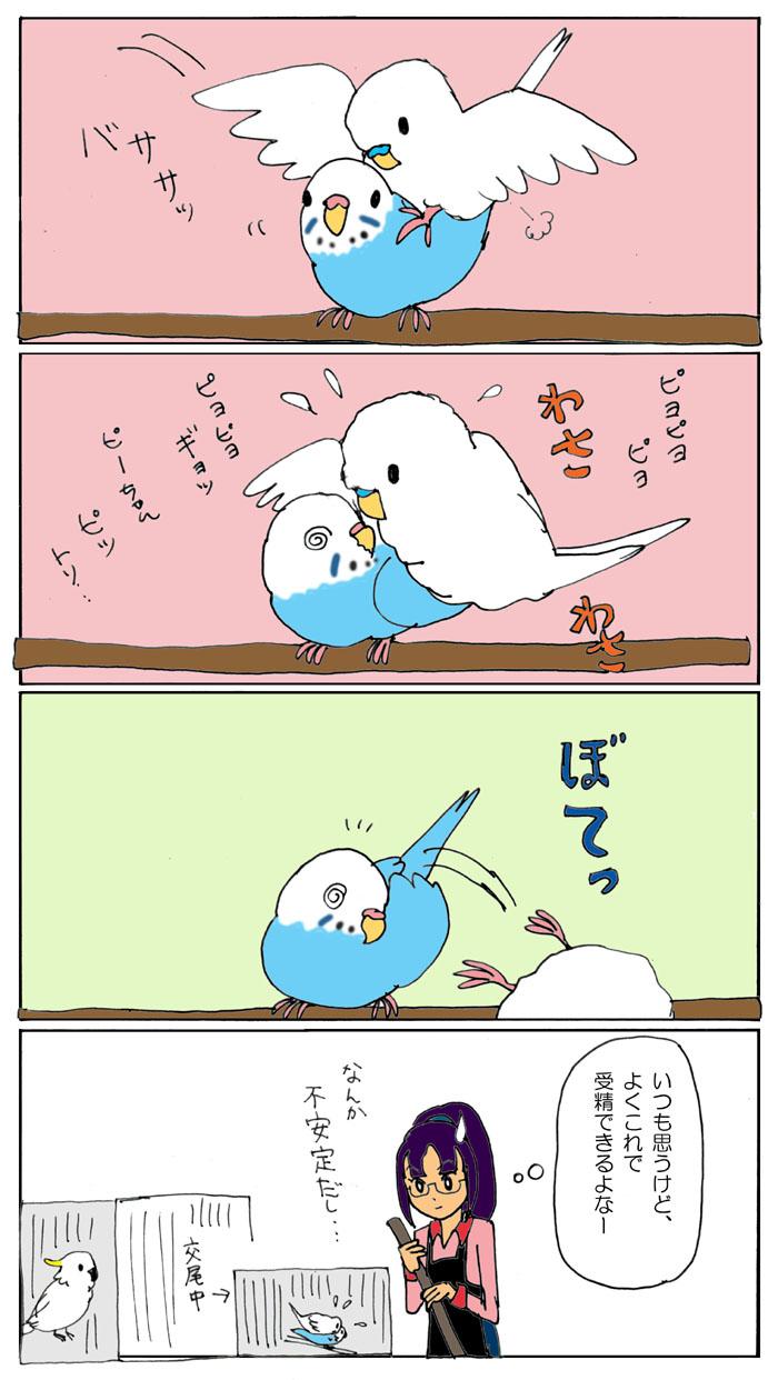 鳥の子作り2