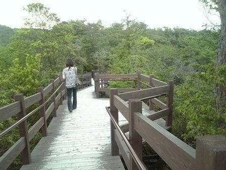 展望台へ橋