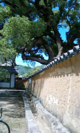 国分寺 壁