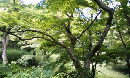 毛利庭園までの紅葉