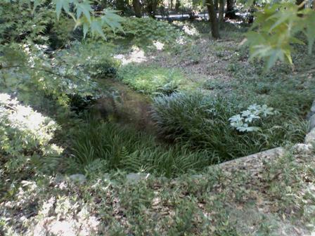 糺の森 川