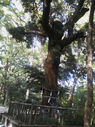 糺の森ご神木
