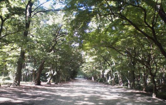 糺の森あるく2