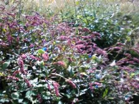 山の草花11