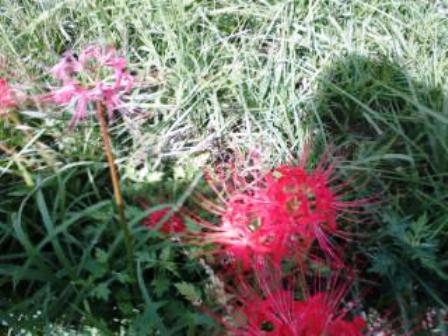 山の草花10