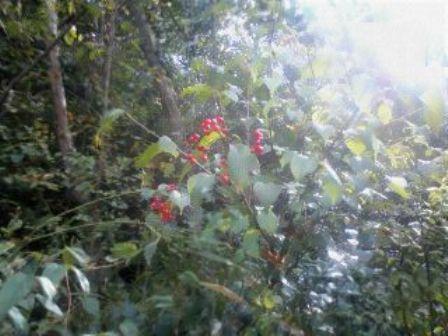 山の草花6(実りの秋)