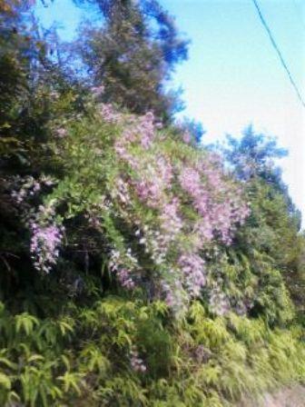 山の草花4