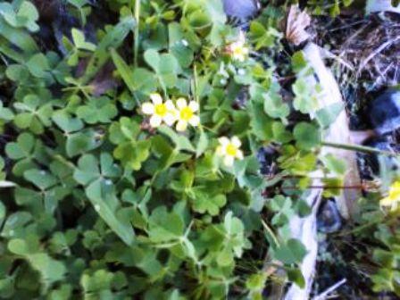山の草花3