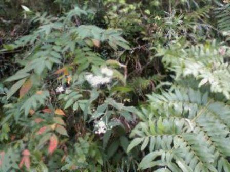 山の草花8
