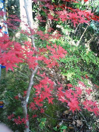 最上稲荷の紅葉