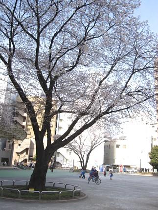 2010033002.jpg