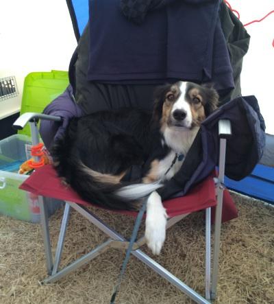 椅子でくつろぐあぷちゃん