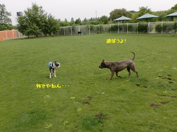 20110616CIMG6140.jpg