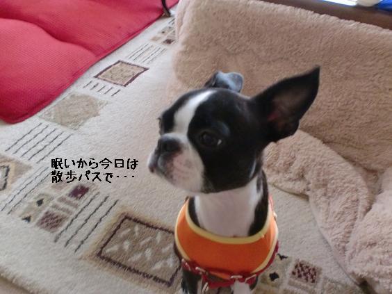 20110620CIMG6113.jpg