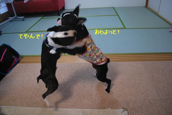 20110712DSC_1506.jpg