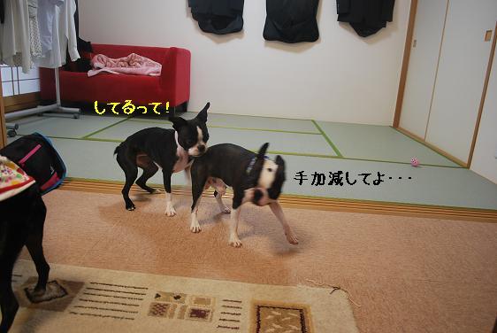 20110712DSC_1518.jpg