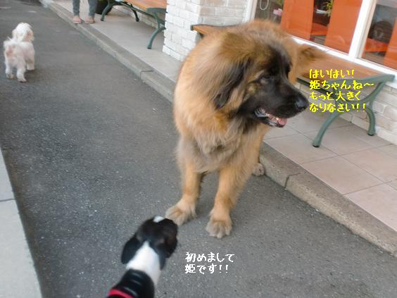 20110716CIMG6327.jpg