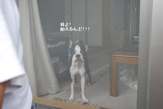 20110812DSC_2511.jpg