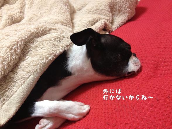 20120121写真 12-01-20 20 57 13