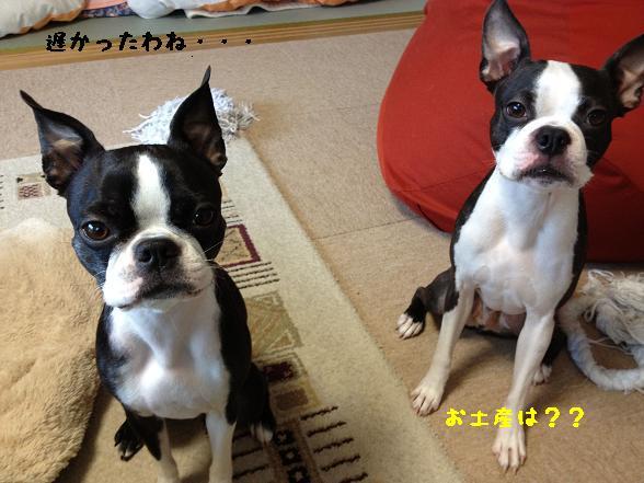 20120214写真 12-02-08 15 31 57
