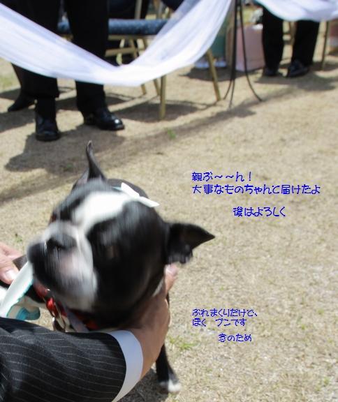 IMG_9984a.jpg