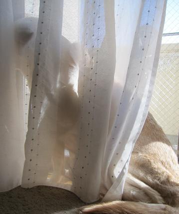 201003311花嫁さんないぶき