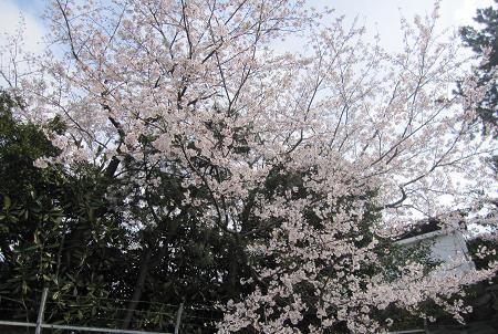 201004061春のにおい