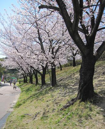 201004151お花見