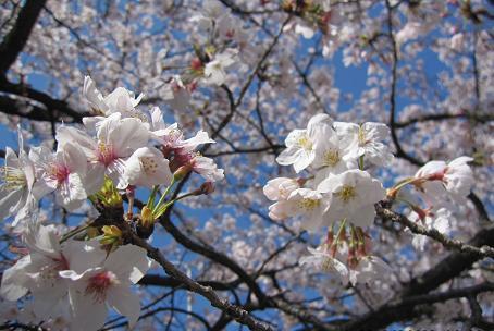 201004152お花見