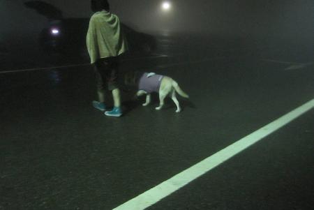 201009026いぶき山