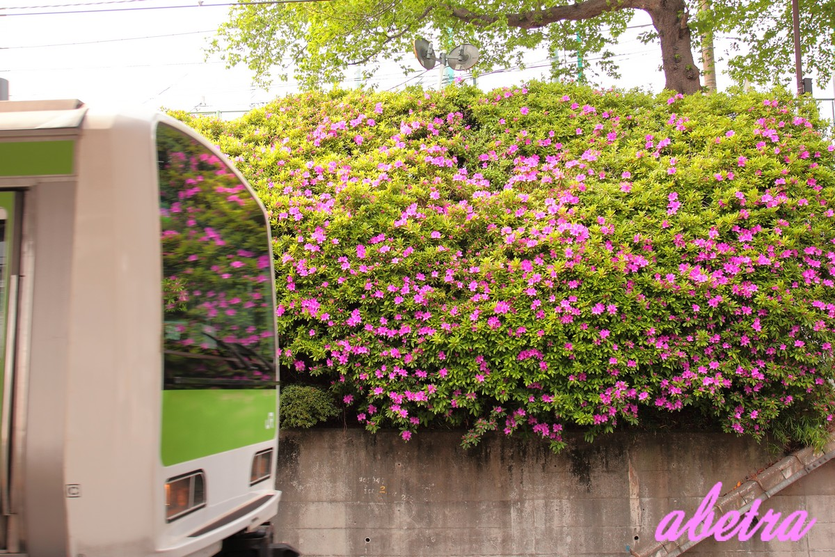 Yamanote Line ~Bloom~