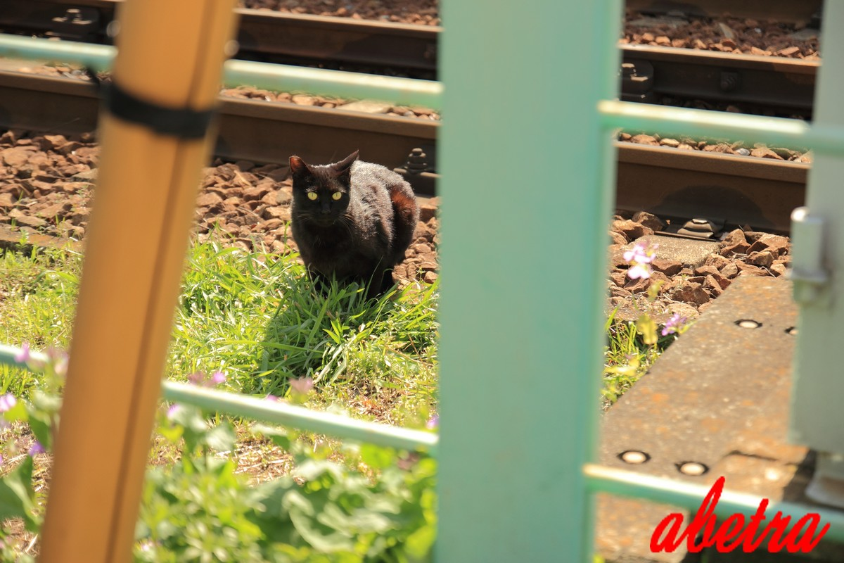 線路脇の黒猫