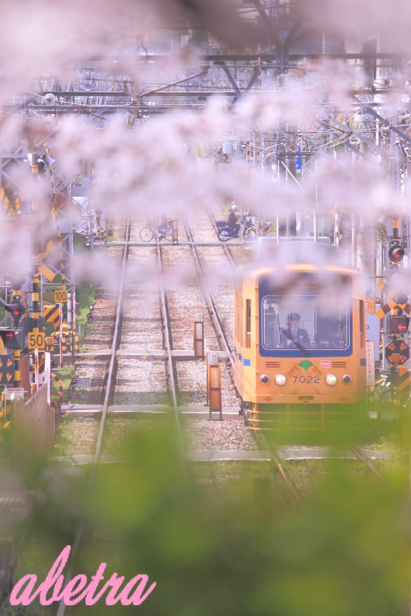 桜葉サンド
