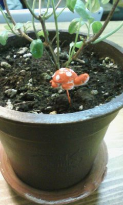 Plant stick