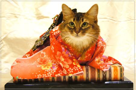 猫の着物姿