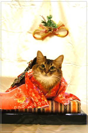 謹賀新年・猫のお着物@ソマリ