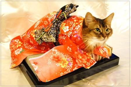 お正月・猫の着物姿