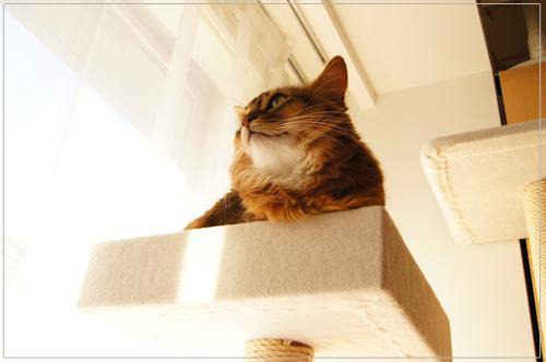 箱猫ソマリ.jpg