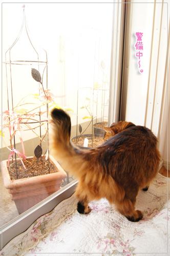 可愛いすぎソマリ猫モンさん.jpg