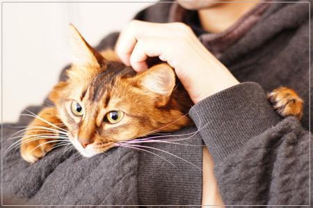 抱っこ大好きソマリ